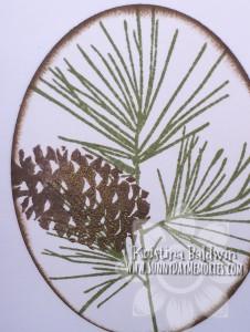 Close-up Pinecone Image